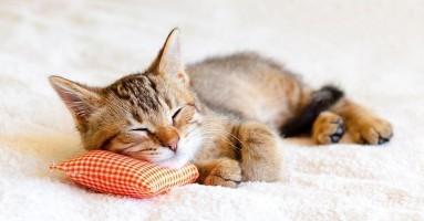 Naukom do kvalitetne hrane koju mačke vole