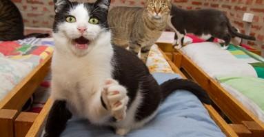Mačke nas kontrolišu zvukovima koje ne možemo ignorisati!