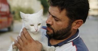 Sirijac hrani napuštene mačke usred rata