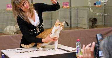 Izložba mačaka u Beogradu 2011