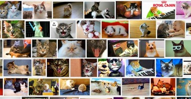 100 video klipova o mačkama za redom?