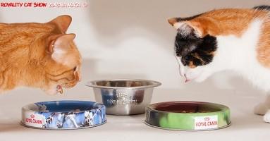 Mačka vam je halapljiva? Evo kako da je usporite kada jede!