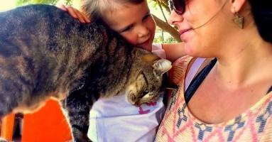 Zamislite tropski raj na Havajima sa 500 mačaka! Da, STVARNO postoji!!!