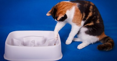 Zagonetke sa hranom POZITIVNO deluju na mačke!