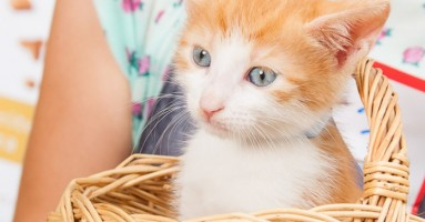 Mačke Royal Pet-a