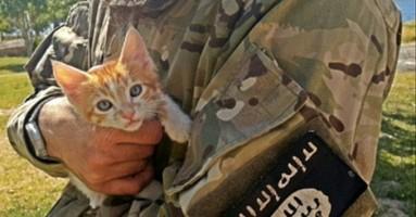 ISIS zabranio Iračanima da gaje mačke u kućama i počeo pretresanje kuća!