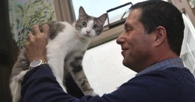 Kako da razumete mačji jezik?