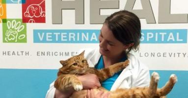 Mačak od 18 kila prepolovio svoju težinu!