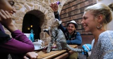 Mačji kafić - Le Cafe des Chats