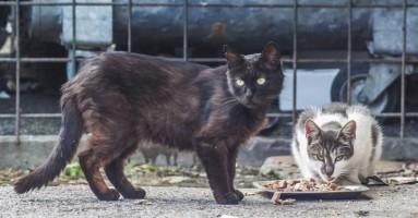 Nahrani mačku i preživećeš kugu!