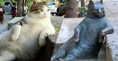 Mačka Tombili dobila spomenik u Istanbulu