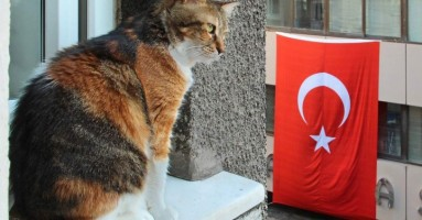 Mačke Istanbula - fotografije Mišela Bertoda