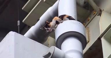 Dvodnevno spasavanje mačeta sa mosta u Tokiju! (+VIDEO)