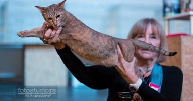 Izložba mačaka u Mikser House-u 2014.