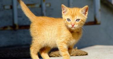 Proliv kod mačića, kako ga sprečiti i lečiti