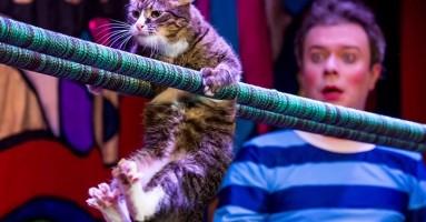 "Moskovsko mačkarsko ""pozorište"" - bezazlena zabava ili mučilište?"