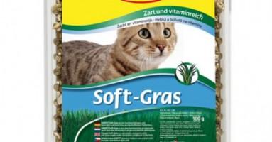 Soft-gras mačja trava u posudi