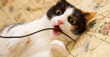 Kako mačke komuniciraju?
